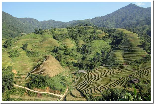 サパの美しい棚田(北ベトナム)